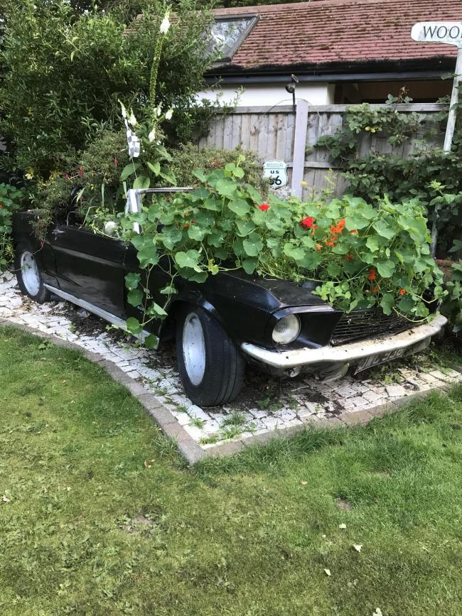 Turned into a garden showpiece - the 1967 Mustang 390 GT