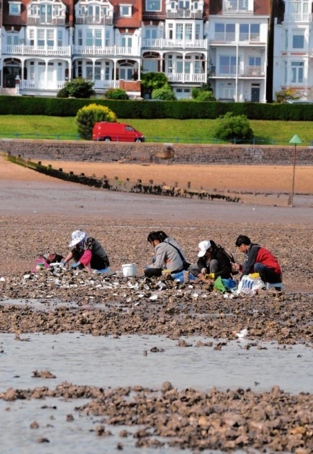 Some of the people taking oysters from Southend beaches
