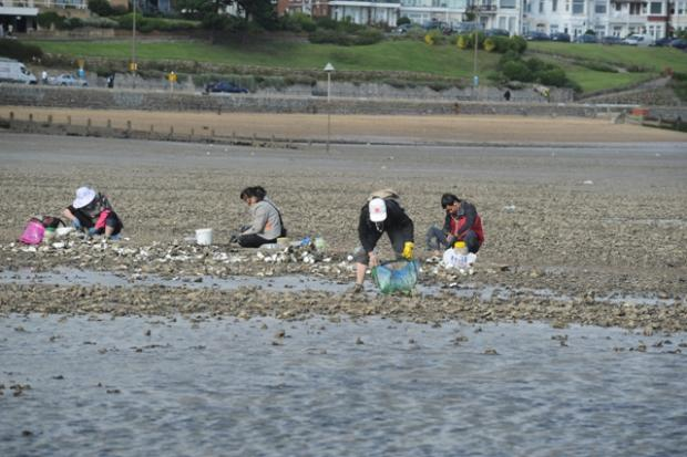 Oyster pickers on Southend seafront