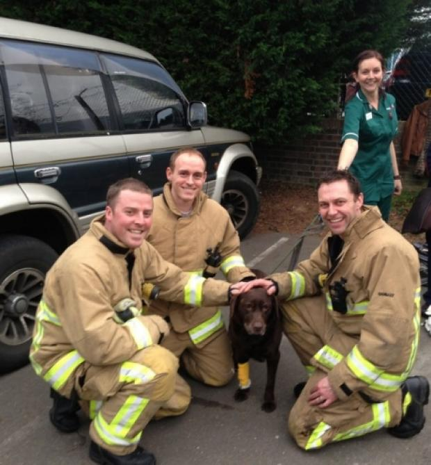 Southend Standard: Firefighter Ben Manning, sub officer Karl Smith and firefighter Wayne Davey, of White Watch, Leigh, with a dog rescued from Medivet in Eastwood (Picture from Essex Fire and Rescue Service)