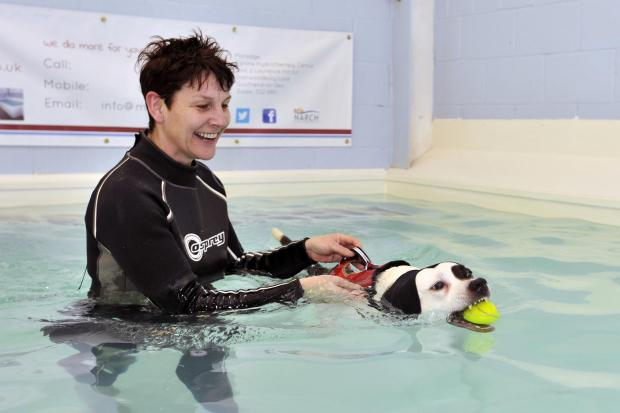 Water therapy helps dog get bounce back: Eastwood hydrotherapy centre helps injured dogs