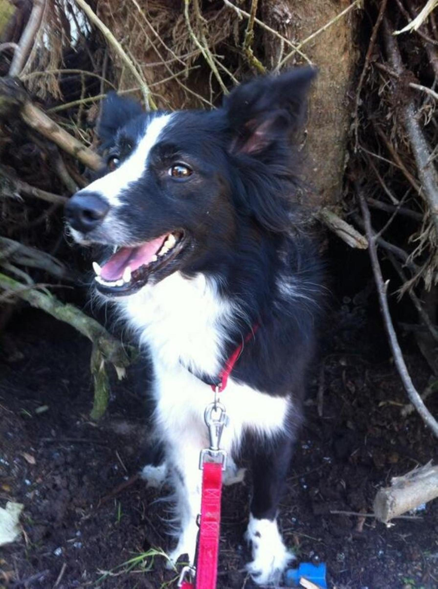 Pet dog rescued from rubble following blast