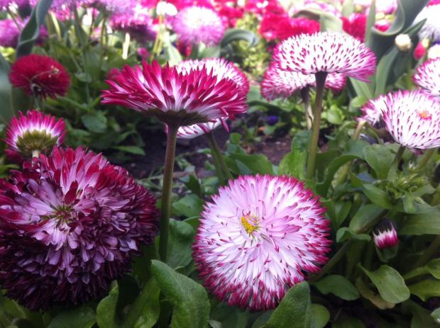 Southend gardening experts hosting open weekend