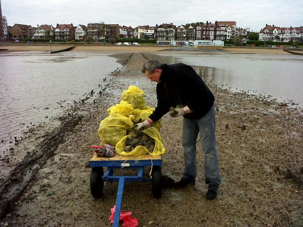 Seized - Carl Robinson, a Southend Council officer, with an illegal oyster haul