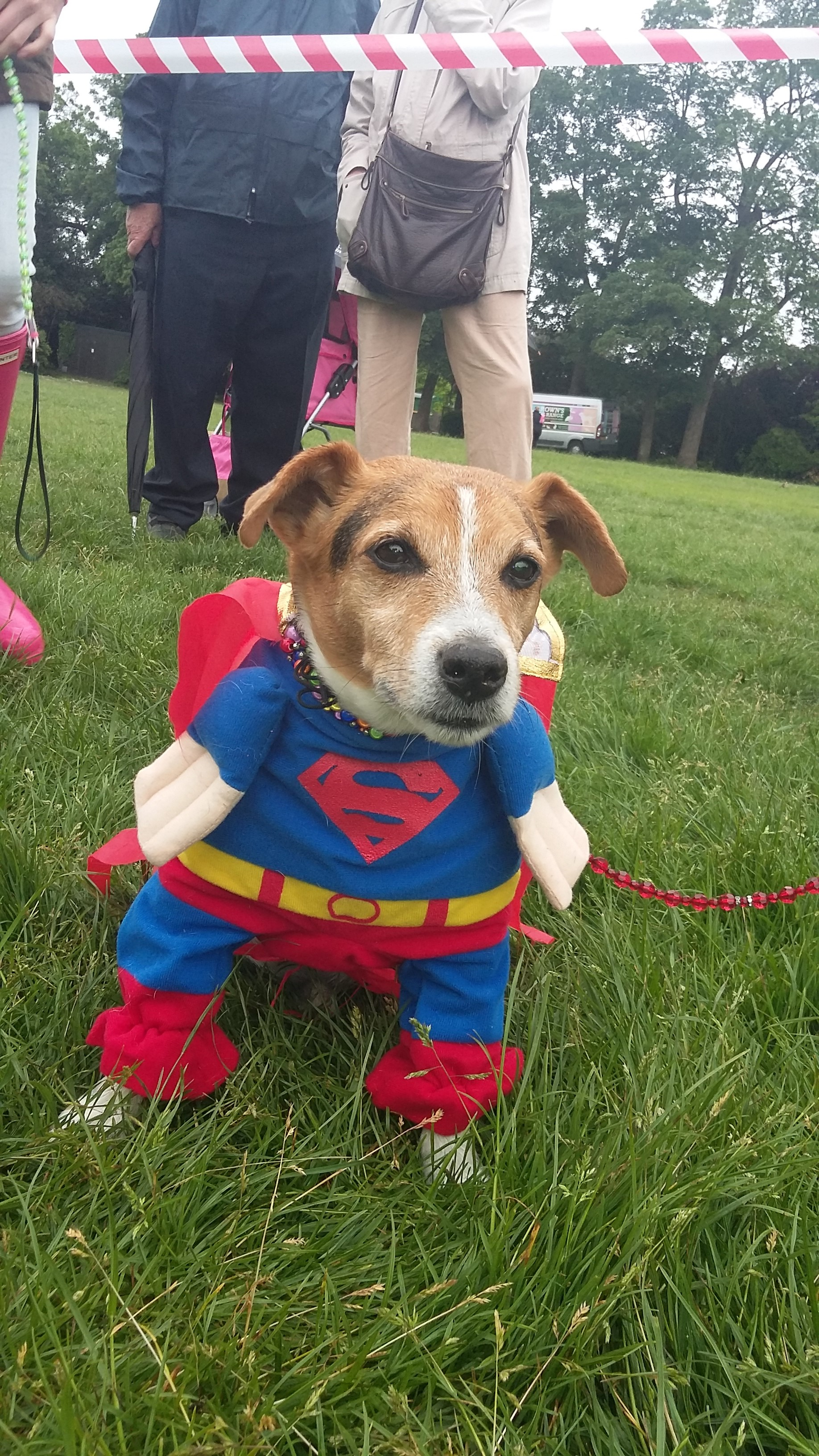 Paws in The Park Fun Dog Show in support of Southend Hospital Charitable Foundation